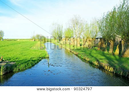 Typical dutch landscape with cropped willows in the countryside from the Netherlands