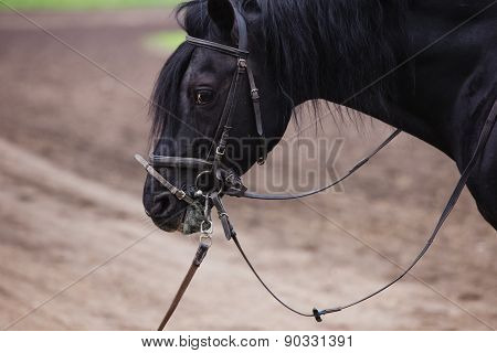 horse head close
