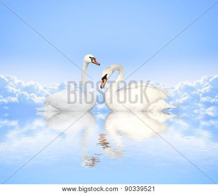 Mute swan on blue water and background with clouds