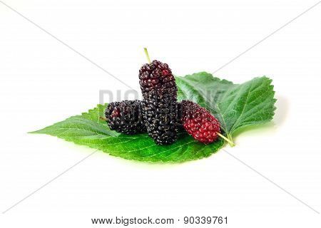 Fresh black and red Mulberry with leaf, fruit