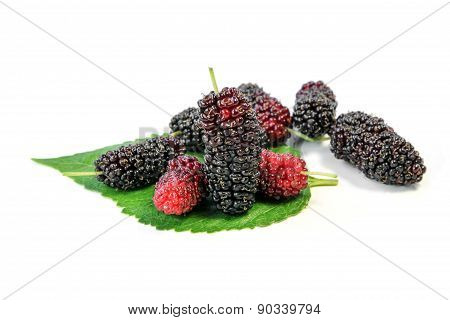 Fresh Mulberry with leaves, fruit