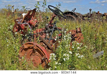 Tractor buried in weeds, flowers, and grass