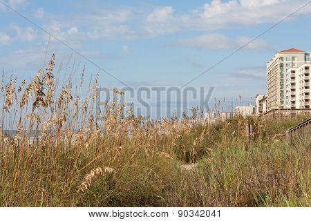 Beach Grasses Myrtle Beach Horizontal