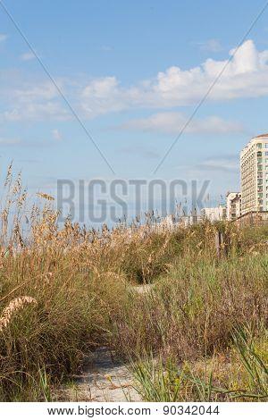 Grassy Dunes Of Myrtle Beach Vertical