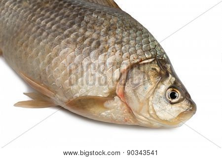 Front of the Crucian carp (Carassius auratus gibelio) isolated on white