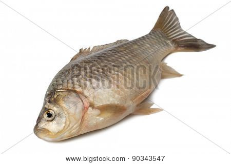 Freshly fish Crucian carp (Carassius auratus gibelio) isolated on white