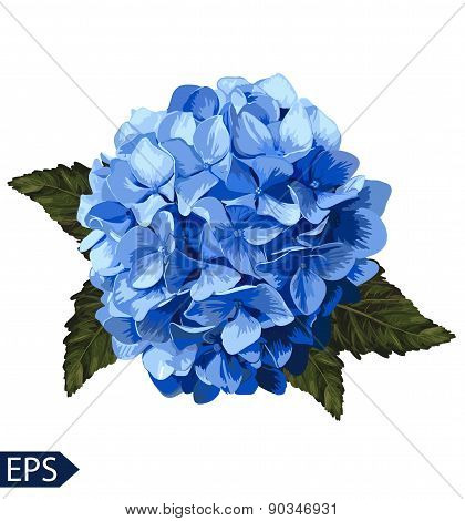 Vector blue realistic hydrangea, lavender. Illustration of flowers.