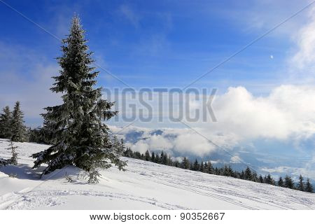 Winter landscape with pine in mountains