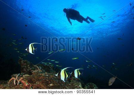Scuba diver, coral reef, fish