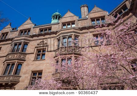 Yale University Buildings In Spring Blue Sky