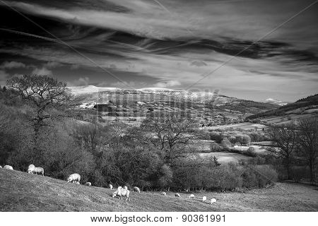 Agricultural Landscape In Winter With Snow Capped Mountain Range In Monochrome