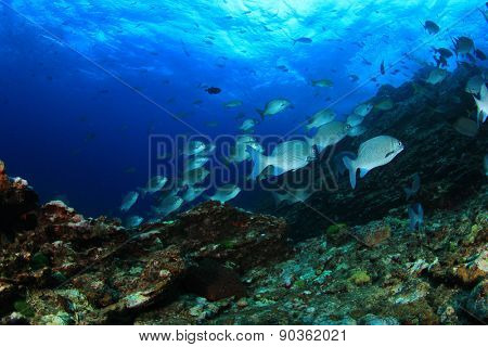 Coral reef in sea and fish