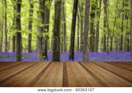 Vibrant Bluebell Carpet Spring Forest Landscape With Wooden Planks Floor