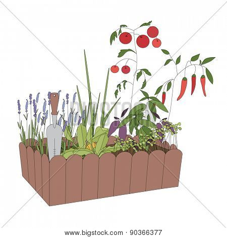 Container with growing vegetables and tools