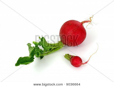 Large and Small Radishes