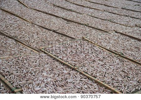 Planty of little anchovy fish drying on open air