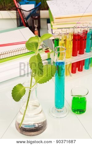 Experiment green plant