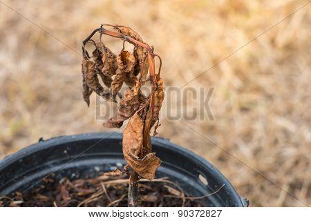 The Flower Die With Flowerpot
