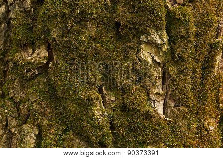Moss On The Bark
