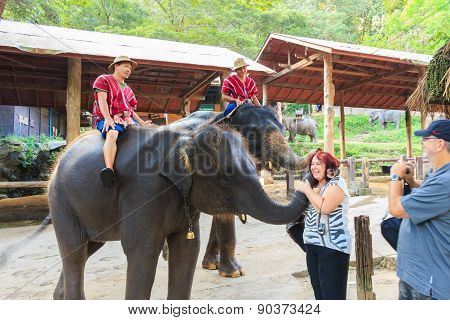 mahouts ride a elephants and greet foreigner