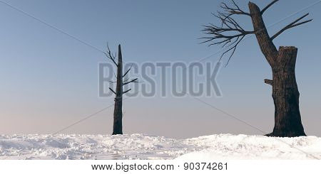 burnt trees on snowy terrain