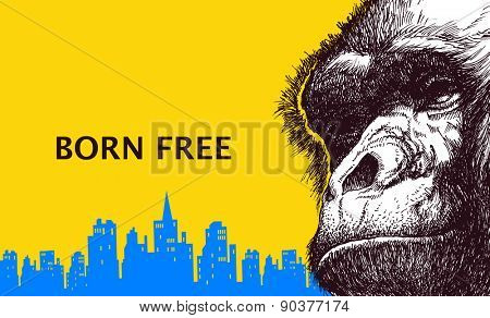 Head gorilla. Hand drawn. Vector illustration. Vector poster.
