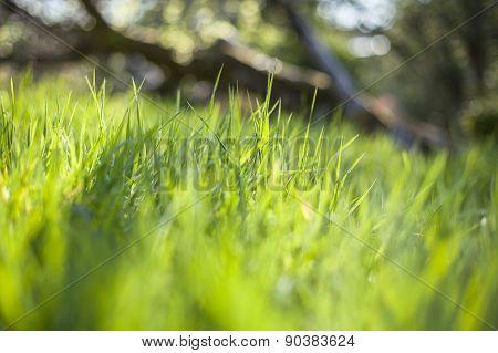 Bokeh Grass In A Garden
