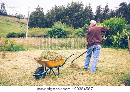 Senior man raking hay with pitchfork on field
