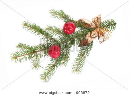Isolated Pine Branch