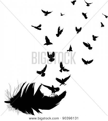 illustration with doves flying from feather silhouette isolated on white background