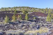 image of vegetation  - New Vegetation on a Volcanic Landscape at Craters of the Moon National Monument in Utah - JPG