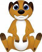 pic of meerkats  - Vector illustration - JPG