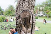 foto of breath taking  - Tree - JPG