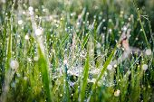stock photo of spiderwebs  - Morning dew on spiderweb with drops on grass - JPG