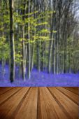 foto of harebell  - Beautiful morning in Spring bluebell forest with wooden planks floor - JPG
