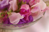 stock photo of sweetpea  - Bouquet of beautiful sweet peas flowers, a studio photo ** Note: Shallow depth of field - JPG