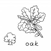 foto of acorn  - Set oak branches with leaves and acorns black contour on white background - JPG
