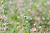 pic of weed  - Flower plant grass weed in the nature or in the garden - JPG
