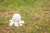 stock photo of disadvantage  - Golf ball on stone and dead grass - JPG