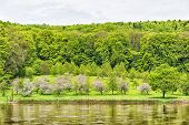 picture of bavaria  - Banks of the Danube with cherry trees between Kelheim and Weltenburg Bavaria Germany - JPG