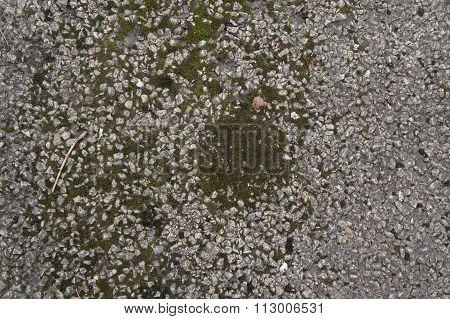 Moss Growing on a Sidewalk