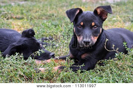 Two stray puppies and natural green grass background