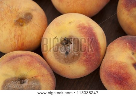 Peach Scab - Close Up Shot Of A Peach Disease