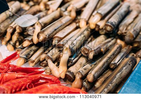 Spanish Alive razor clams shells Navajas on market store shop