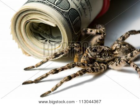 Spider Ready For Attack Near Dollars Roll Isolated On White