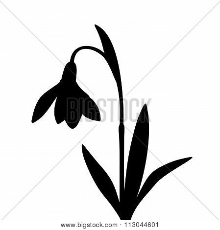 Black silhouette of a snowdrop flower. Vector illustration.