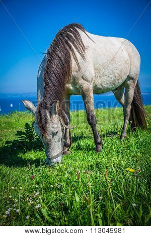 Beautiful Light Horse Grazes On Meadow By Autumn