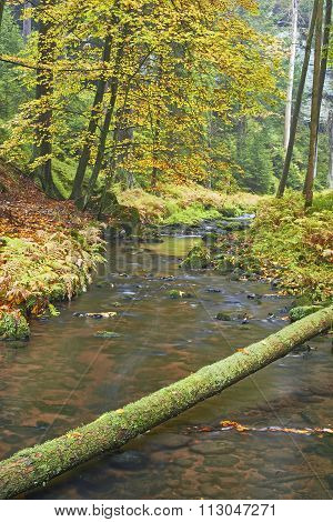 Autumn Brook