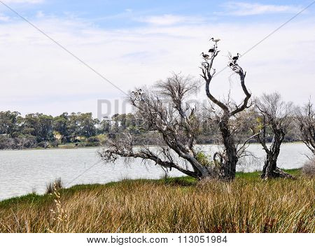 Lake Coogee Landscape with Wild Ibises
