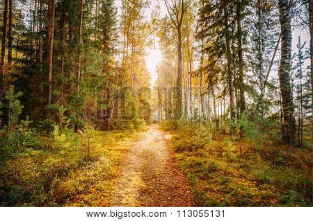 Sun shining over road, path, walkway through forest. Sunset Sunr